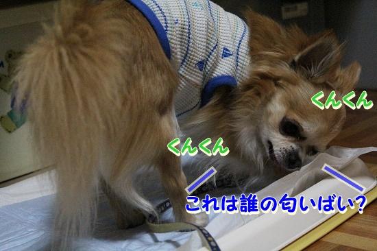 たろ&さちちゃん♪ (7)