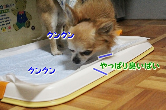 たろ&さちちゃん♪ (11)