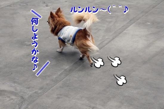 屋上でランランラン♪ (2)