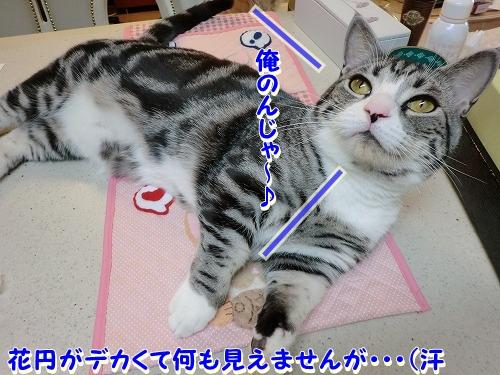 花円&キャロル♪ (2)