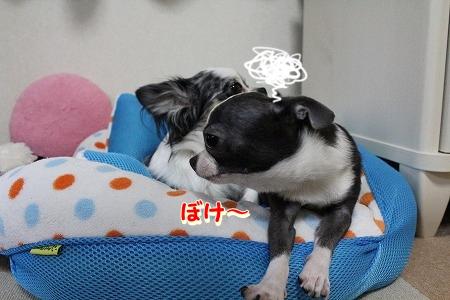 眠いよ~♪ (4)