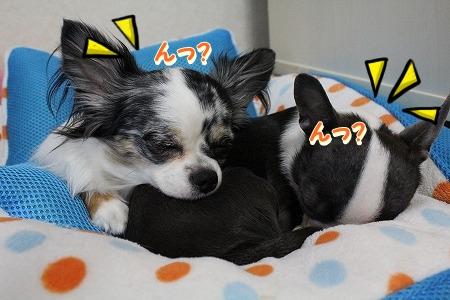 眠いよ~♪ (2)
