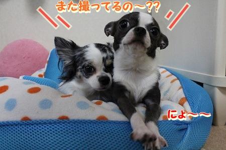 眠いよ~♪ (3)