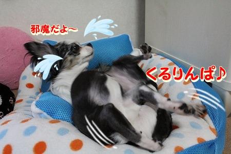 眠いよ~♪ (10)