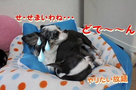 眠いよ~♪ (9)