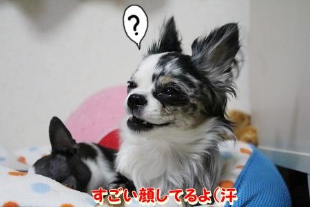 まーちゃん♪ (5)