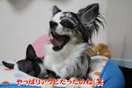 まーちゃん♪ (4)