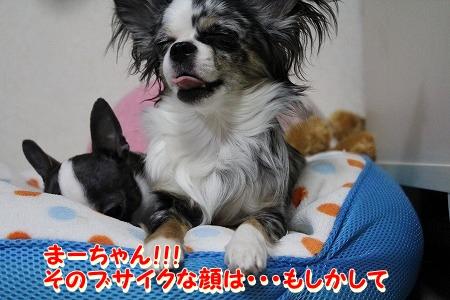 まーちゃん♪ (3)