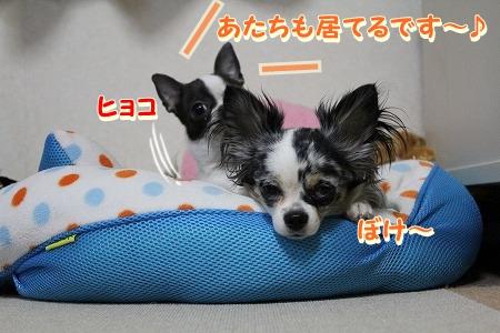 まーちゃん♪ (2)
