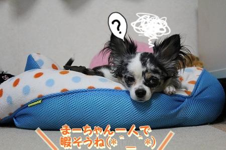 まーちゃん♪ (1)