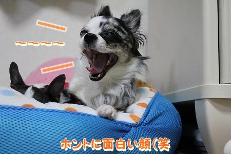 まーちゃん♪ (10)