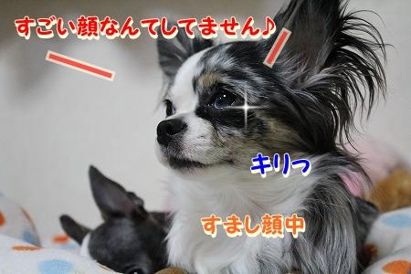 まーちゃん♪ (6)