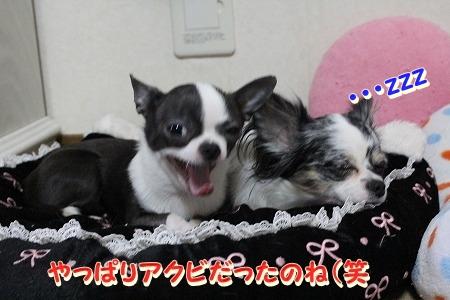 運動会♪ (2)