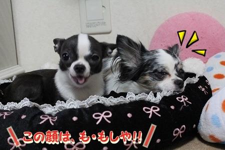 運動会♪ (1)