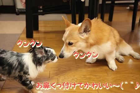 ななちゃん再び♪  (5)