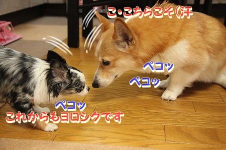 ななちゃん再び♪  (6)