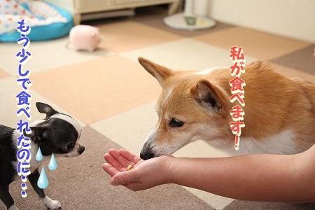 ななちゃん再び♪  (2)