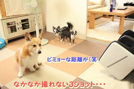 ななちゃん再び♪  (10)