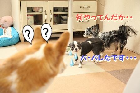 ななちゃん再び♪  (12)