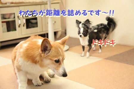 ななちゃん再び♪  (11)