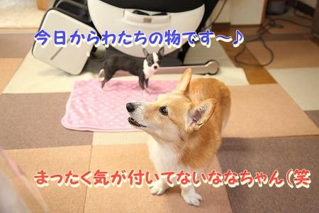 ななちゃん再び♪  (9)