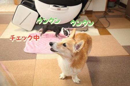 ななちゃん再び♪  (8)