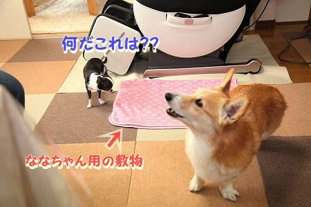 ななちゃん再び♪  (7)