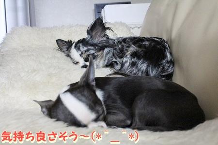 すやすや♪ (2)