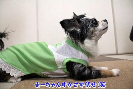 かわいい夏服♪ (4)