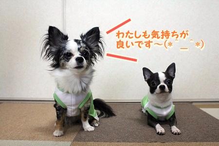 かわいい夏服♪ (2)