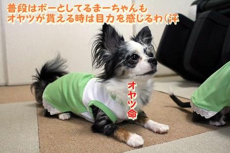 かわいい夏服♪ (9)