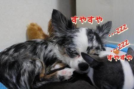 仲良し (1)