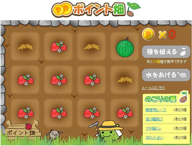 ポイント畑_収穫
