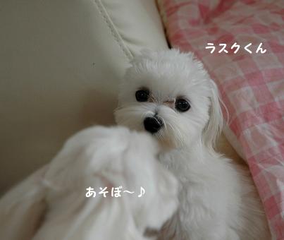 20110522-0244.jpg