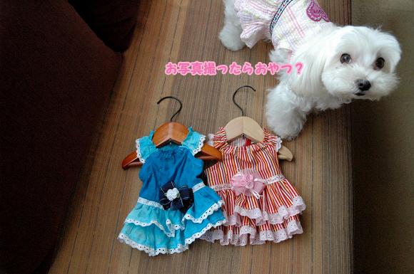 20110806-022.jpg