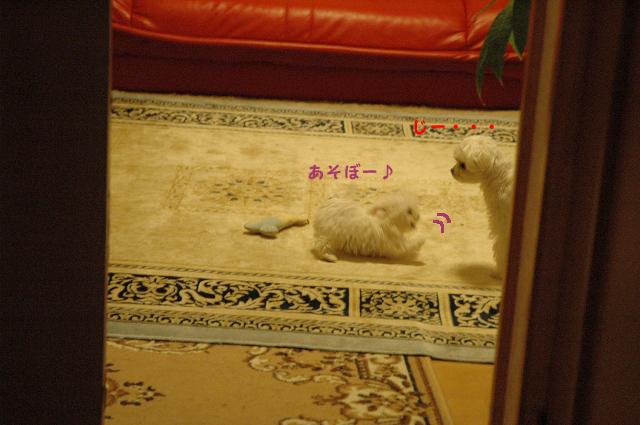 20111208-065_20111215000007.jpg