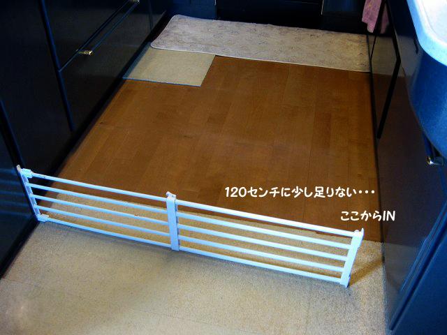 20120325-037.jpg