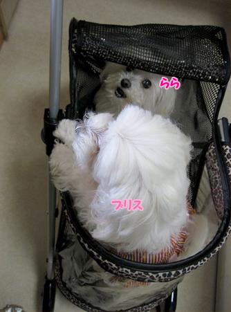 20120421-022.jpg