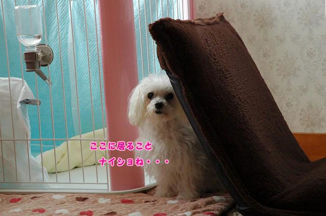 20120602-116.jpg