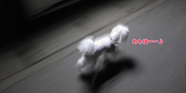 20120607-007.jpg