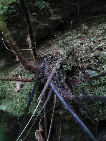 クルマシダ2012.03-5