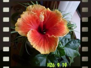 P1110927_convert_20140919111141.jpg