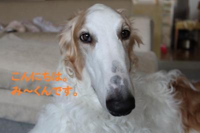 縺ソ繝シ縺上s_convert_20100729192547