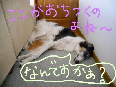 DSCN3519_convert_20100828191633.jpg