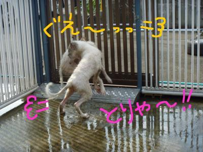 Pupy_convert_20100907195506.jpg