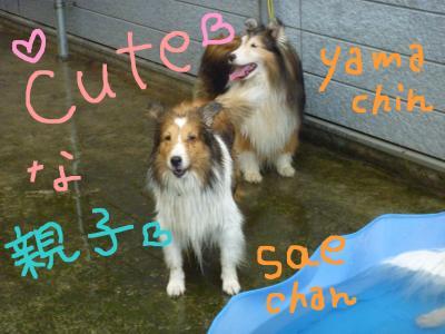yama+sae_convert_20100907195613.jpg