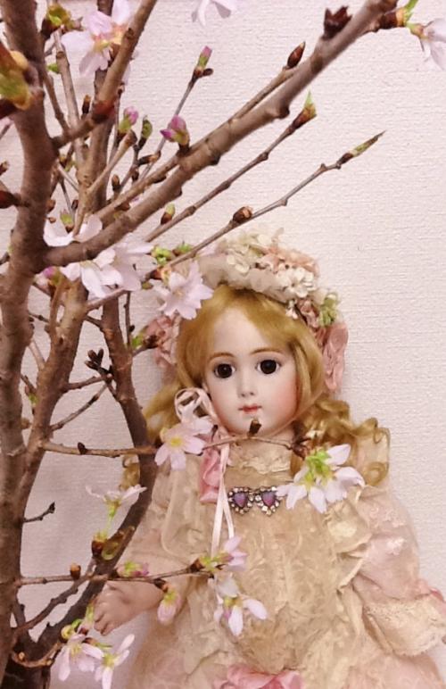 みちのく桜1