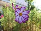 budou-20110918-05s.jpg