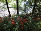 budou-20110918-30s.jpg