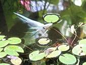 fp-20121008-18s.jpg